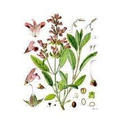 Aceite Esencial de SALVIA 10ml.