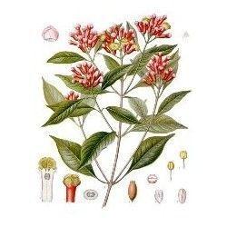 Aceite esencial de CLAVO 10ml.