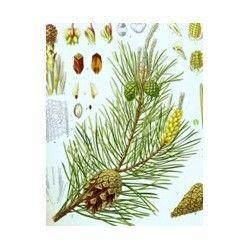 Aceite Esencial de pino 10ml.