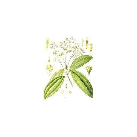 Aceite esencial de CANELA CEYLAN 10ml.