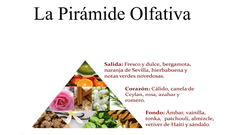 Pirámide olfativa First Collection