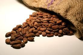 Cacao amazónico en polvo