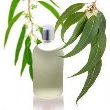 Aceite esencial de eucaliptus (eucalipto)
