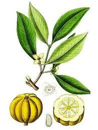 Garcinia Cambogia (adelgazante)