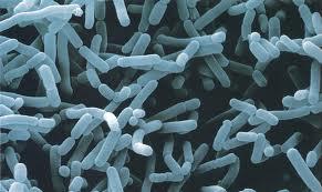 Pre-probióticos